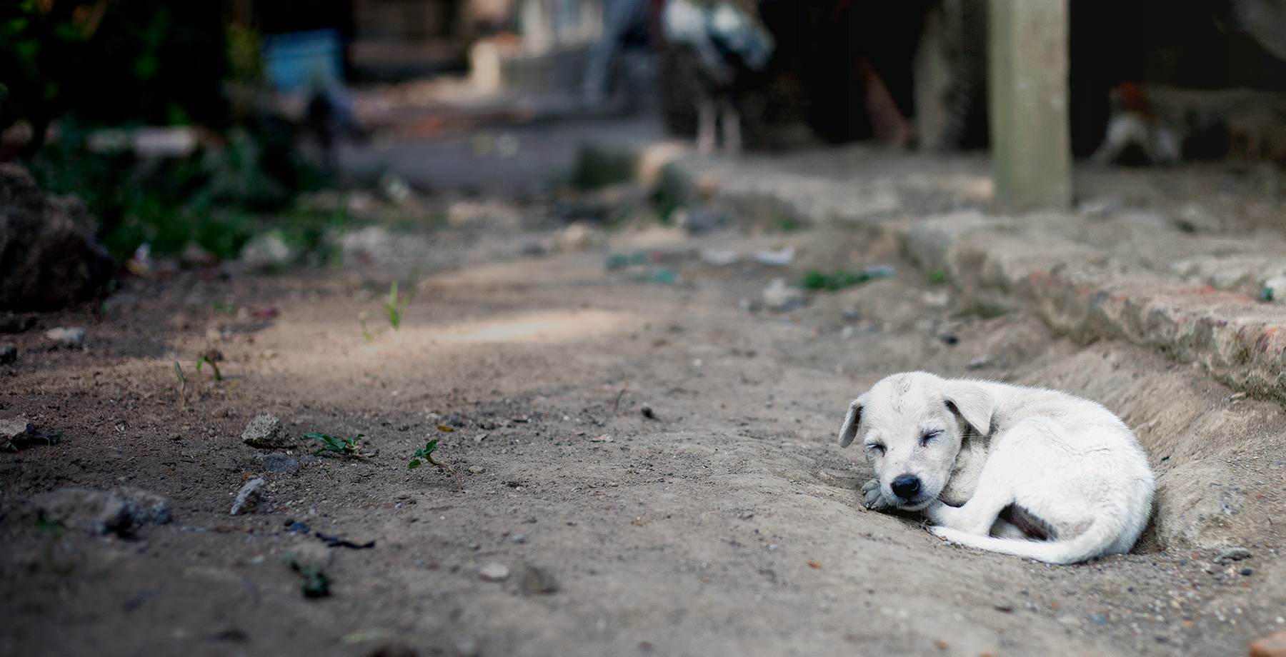 Stray Dog And Cat Rescue Services